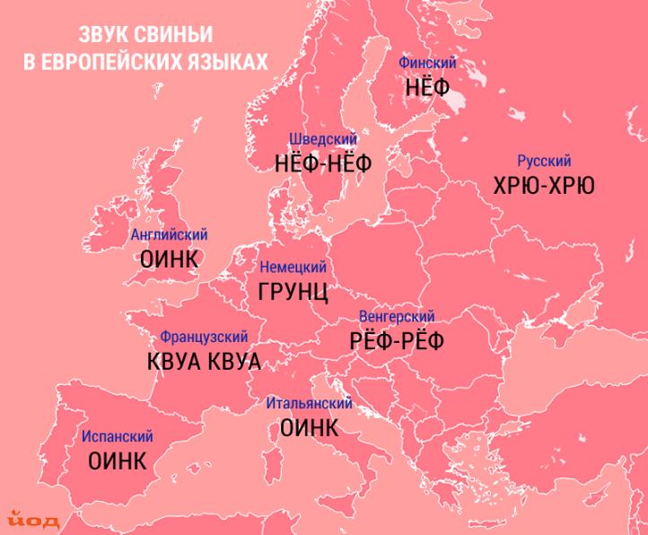 Karta_zvukov_zhivotnyh_svinya.png